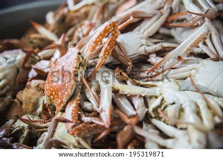 Lots of steamed blue crabs - stock photo