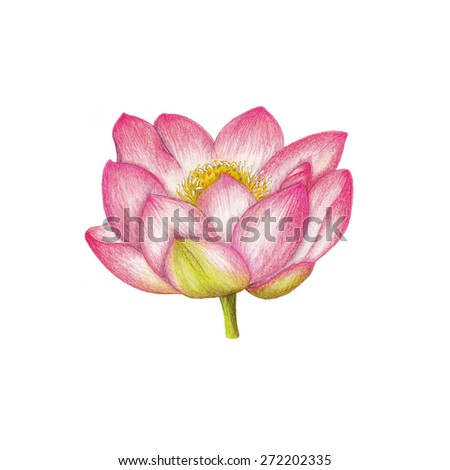 Lotus - stock photo