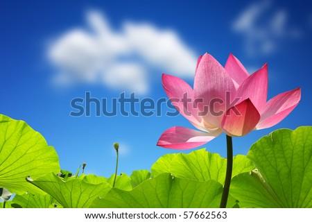 Lotus against perfect sky - stock photo