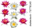 Lotus and water lily set isolated on white - stock photo