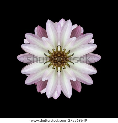 Lotus bloom on black background - stock photo