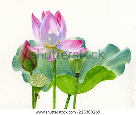Lotus Blossom with Lily Pad.  Watercolor painting, illustration style, with a light pink blossom, bud, two seed pods and a lily pad. - stock photo