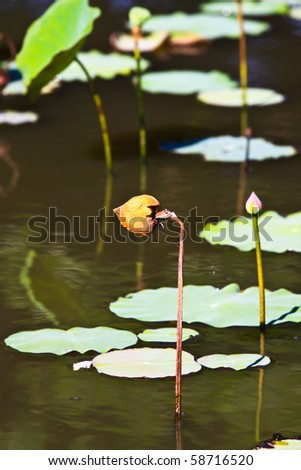 Lotus die - stock photo
