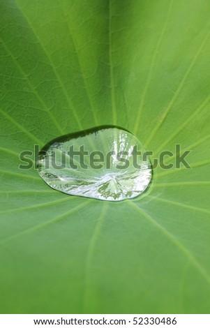lotus effect - stock photo