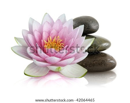 lotus flower and pebbles - stock photo