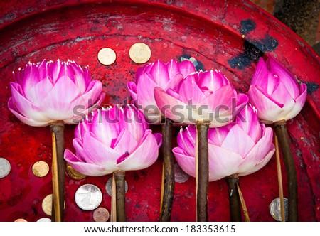 Lotus flower for Buddhist religious ceremony - stock photo