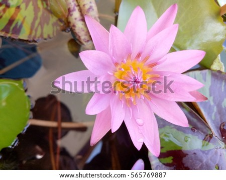 Lotus Flower Vase Stock Photo Royalty Free 565769887 Shutterstock