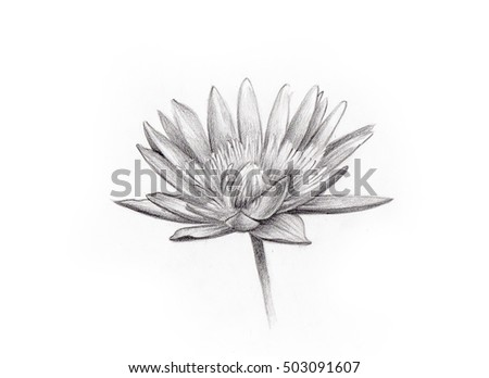Lotus flower isolated line art pencil drawing on white background