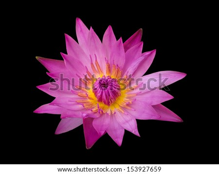 Lotus flower isolated on black.