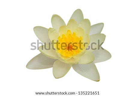Lotus flower isolated on white � clipping path included - stock photo