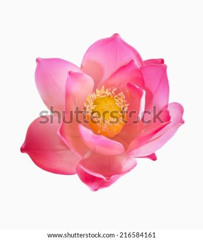 Lotus flower on white background - stock photo