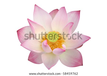lotus flower - path included - stock photo