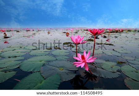 lotus flower reflect in the Lake Nong Harn, Thailand - stock photo