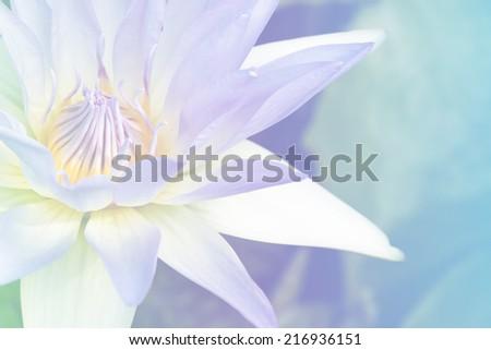 lotus flower soft focus with pastel tones - stock photo