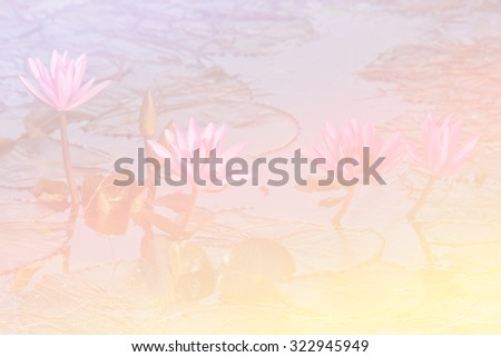 Lotus flower with pastel tone - stock photo