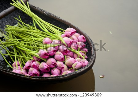 Lotus flowers on a boat in West lake, Hanoi, Vietnam