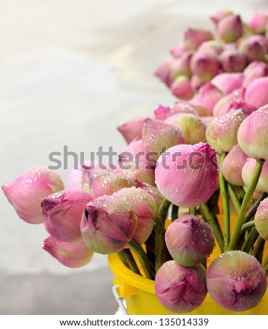 lotus for Buddhist religious ceremony - stock photo