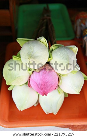 lotus for Buddhist religious ceremony in Chiang Mai thailand. Photo taken on october 7, 2014 - stock photo