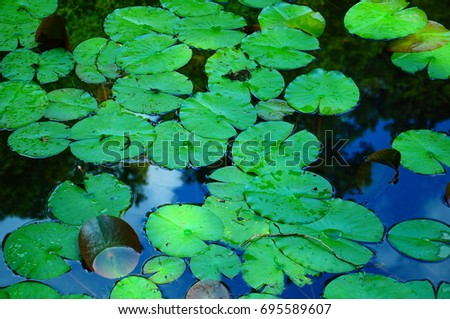 https://thumb7.shutterstock.com/display_pic_with_logo/167494286/695589607/stock-photo-lotus-in-pond-at-garden-695589607.jpg