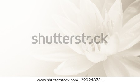 lotus in soft and vintage color style on mulberry paper texture for background