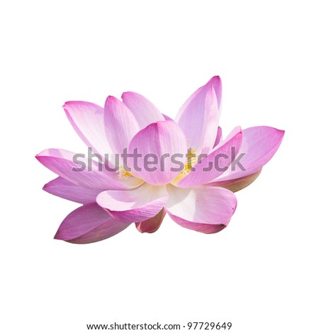 lotus  isolated on white with a clipping path - stock photo