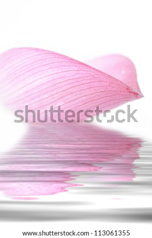 Lotus petal collection on white background - stock photo