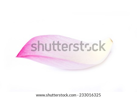 lotus petal isolated on white background.