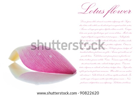 Lotus petal on white background with area for your text - stock photo