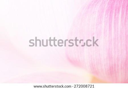 Lotus petals - stock photo
