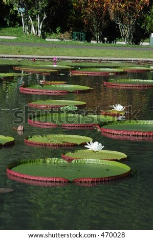 Lotus Pond Bogor Botanical Garden Java Stock Photo (Royalty Free ...