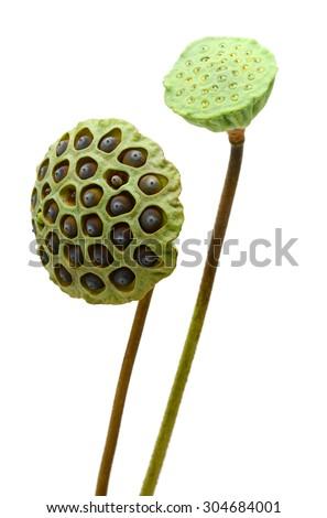 lotus seedpod isolated on white background - stock photo