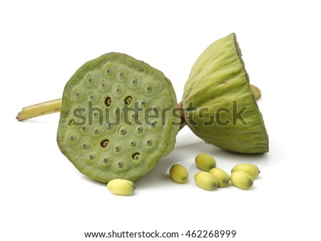 Lotus seeds green Isolated