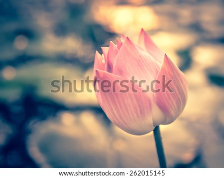 lotus vintage look for background - stock photo