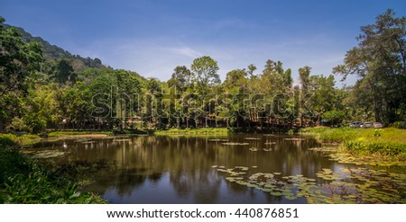 Lotus Water Pond Lake Brown Green Blue Yellow Landscape Tree