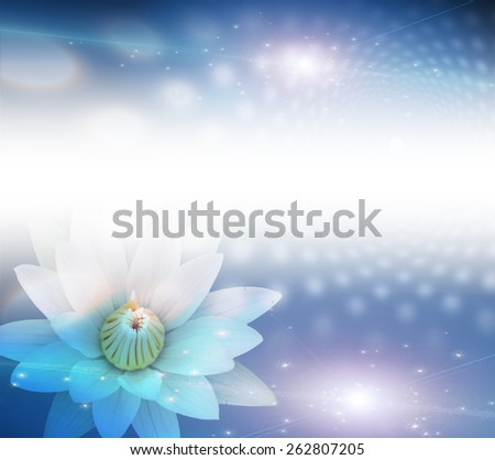 Lotus White - stock photo