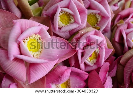 lotus with folded petals - stock photo