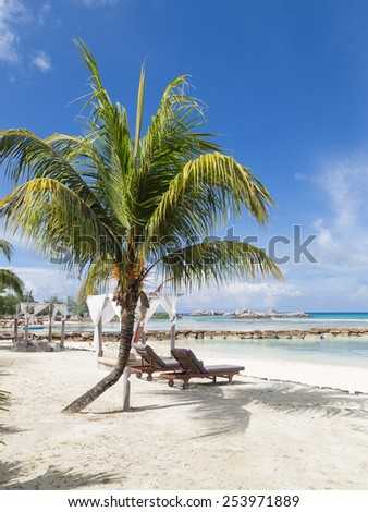 loungers on the beach under a palm tree, vertical