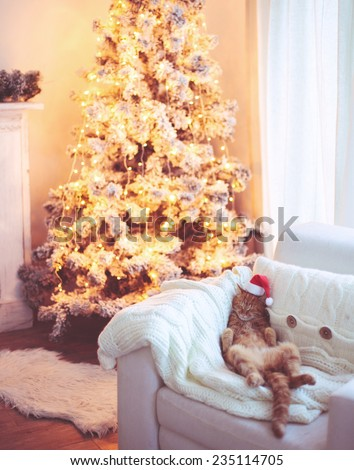 Lovable ginger cat wearing Santa Claus hat sleeping on chair near Christmas tree at home interior - stock photo