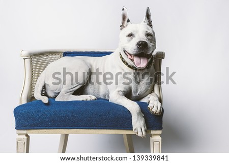 Lovable Older Dog Resting on Blue Wicker Chair