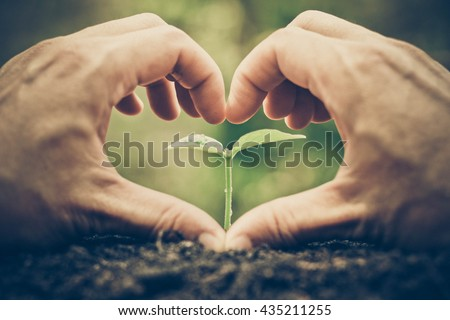 Love and protect nature. Nurturing young plant seedling. Growing tree. Agriculture. Reforestation. Save the world - stock photo