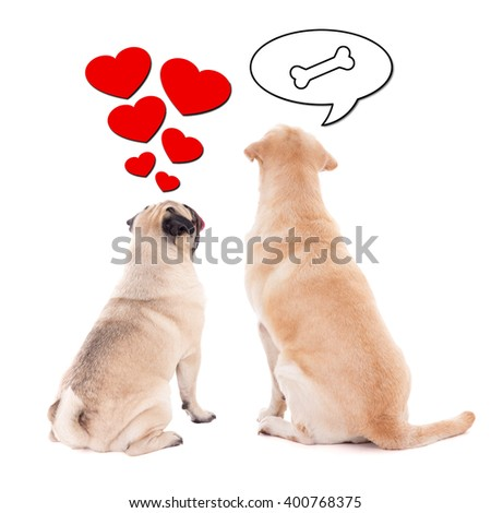 love and relationship concept - two cute dogs over white background - stock photo