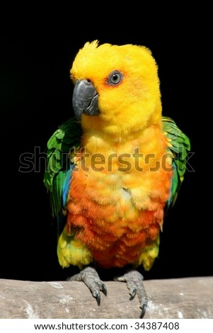 Love bird parrot perched on branch - stock photo
