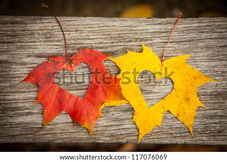 Love hearts on colorful autumn leaves with wooden background. - stock photo