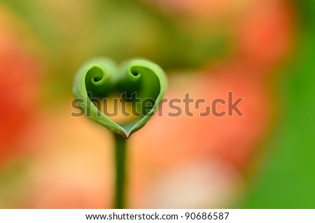 Love shape lotus leaf - stock photo