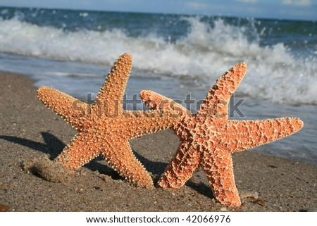 Love the Beach - stock photo