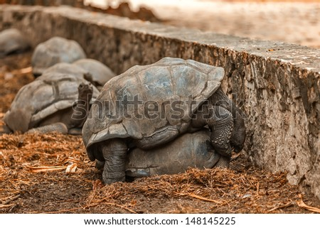 love the giant elephant tortoise Seychelles La Digue - stock photo