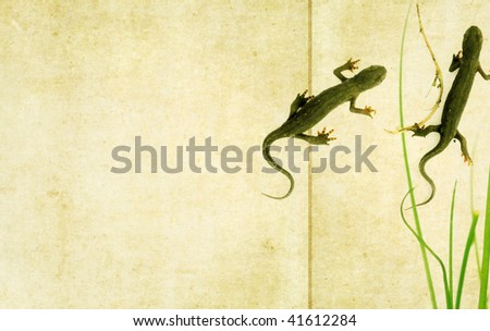 lovely background image with close-up of a couple of salamanders. useful design element.