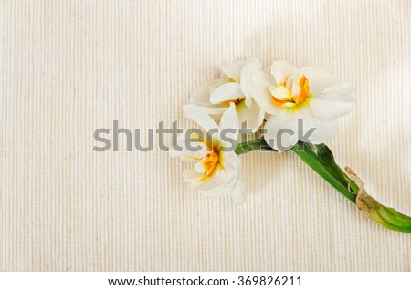 lovely bouquet of narcissus on beige cotton - stock photo