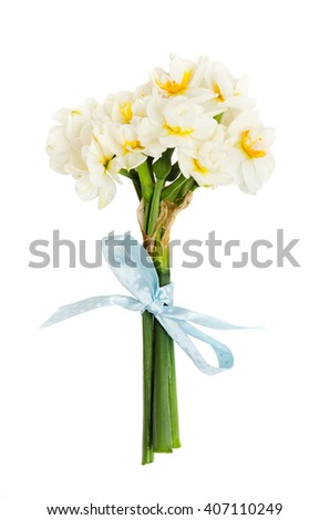 lovely bouquet of narcissus with a charming blue bow isolated on white