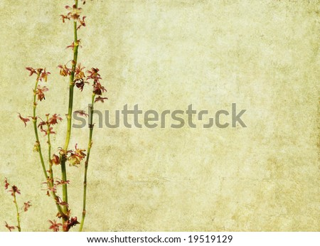 lovely brown background image with floral elements